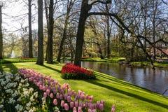 Park met multi-colored de lentebloemen met pond Stock Afbeelding
