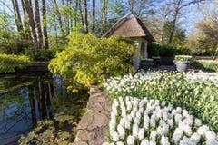 Park met multi-colored de lentebloemen met pond Royalty-vrije Stock Afbeelding