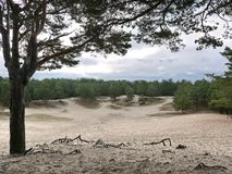 Park met pijnboom en zand, details en close-up stock fotografie