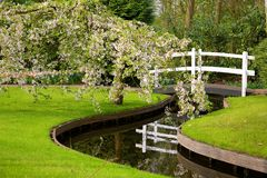 Park met tot bloei komende boom, beek en brug Royalty-vrije Stock Foto