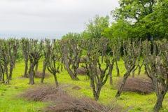 Park met veel bomen Stock Fotografie