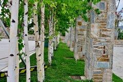 Park met witte bomen en kolommen van verschillende stenen royalty-vrije stock afbeelding