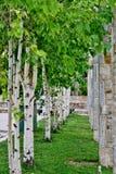 Park met witte bomen en kolommen van verschillende stenen stock afbeelding