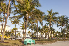 Park in Miami Beach, Florida. Park with coconut palm trees in Miami Beach. Florida, United States stock photography
