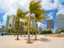 Park in Miami with a view of the city skyline Royalty Free Stock Photos