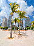 Park in Miami with a view of the city skyline Stock Photography