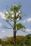 Park mit Bäumen Lizenzfreie Stockfotos