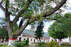 Park mit Bäumen und Kolonialhäusern in Valle-De San Jose, Kolumbien stockfoto