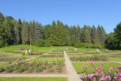 Park mit blühenden Rosen Stockfotos