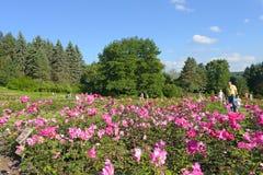 Park mit blühenden Rosen Lizenzfreie Stockfotografie