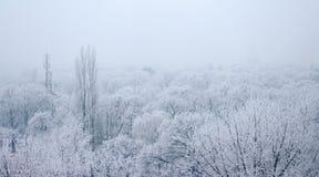 Park mit gefrorenen Bäumen Lizenzfreies Stockfoto