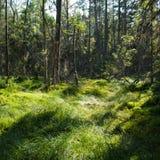 Park mit grünem Gras und Bäumen Lizenzfreie Stockfotografie