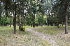 Park mit grünen Bäumen Stockbilder