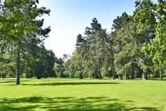 Park mit grüner Wiese und Wald Lizenzfreie Stockfotos