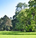 Park mit grüner Wiese und Wald Lizenzfreies Stockbild