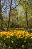 Park mit mehrfarbigen Frühlingsblumen Stockfotografie