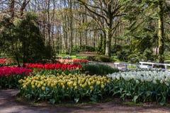 Park mit mehrfarbigen Frühlingsblumen Stockbilder