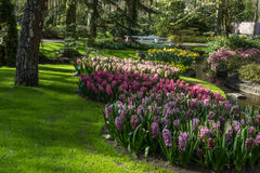 Park mit mehrfarbigen Frühlingsblumen Lizenzfreie Stockbilder