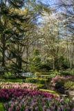 Park mit mehrfarbigen Frühlingsblumen mit Pfund Lizenzfreies Stockbild