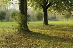 Park mit zwei Bäumen Lizenzfreie Stockfotografie