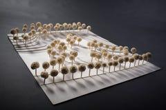 Parkera fjäll modellerar Arkivbild
