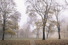 Park in the mornig. Magical Autumn Forest. Park. Beautiful Scene. Foggi morning Stock Images