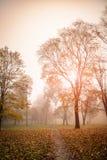 Park in the mornig. Magical Autumn Forest. Park. Beautiful Scene. Foggi morning, Sunrise Stock Photography