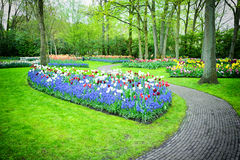 Park with multicolored tulips Stock Image