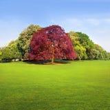 Park na słonecznym dniu. Krajobraz. Zdjęcie Royalty Free