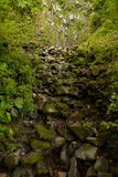 Park Narodowy, Costa Rica Obrazy Stock
