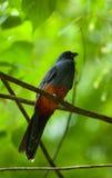 Park Narodowy, Costa Rica Zdjęcia Stock