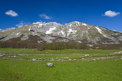 Park Narodowy Durmitor przy wczesną wiosną, Montenegro Fotografia Royalty Free