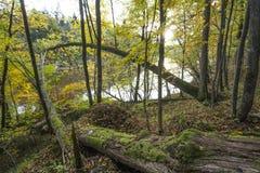 Park Narodowy Gauja Las przy jesienią Latvia Zdjęcie Stock