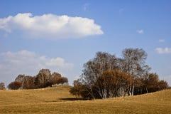 park narodowy lasowy saihanba Obraz Stock