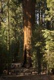 park narodowy sequoia Zdjęcie Royalty Free