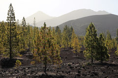 park narodowy teide Tenerife Fotografia Stock