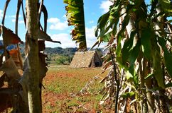 Park Narodowy Vinales i swój tabaczni gospodarstwa rolne Obraz Stock
