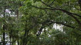 Park Narodowy w Nowym Orlean Zdjęcie Stock