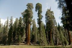 park narodowy wejściowa sequoia obrazy royalty free