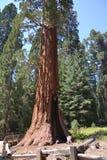 park narodowy wejściowa sequoia obraz stock