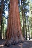 park narodowy wejściowa sequoia obraz royalty free