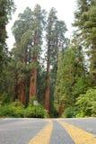 park narodowy wejściowa sequoia Zdjęcia Stock