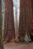 park narodowy wejściowa sequoia Obrazy Stock