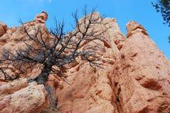 park narodowy zion Zdjęcia Royalty Free