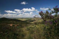 Park national in brazil Stock Image