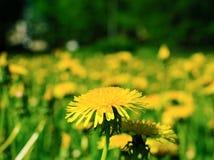 Park ans flowers Stock Image