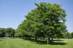 The park near castle Cerveny Kamen royalty free stock photo