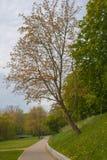 Park near the city of greifswald stock photos