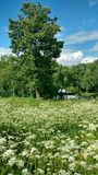 The park near river. The park with flowers near river Stock Image