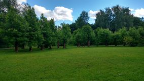 The park near river in Moscow. The park with flowers near river Stock Photography